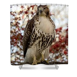 Shower Curtain featuring the photograph Two Reds Are Better Than One by Stephen Flint
