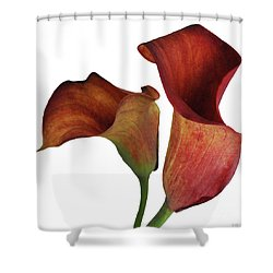 Two Rust Calla Lilies Square Shower Curtain