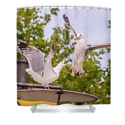 Two Seabird Fighting Shower Curtain