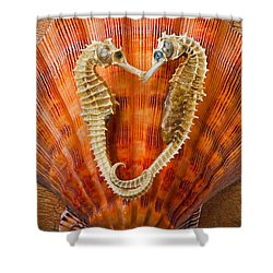 Two Seahorses On Seashell Shower Curtain