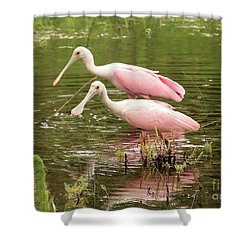 Two Spoonbills In Pond Shower Curtain by Carol Groenen