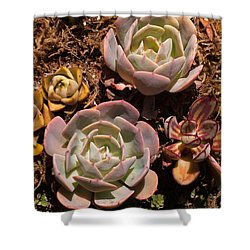 Two Succulents  Shower Curtain by Catherine Lau