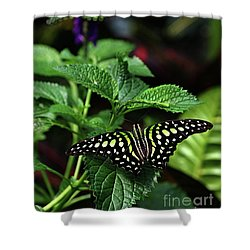 Two Tailed Jay Butterflies- Graphium Agamemnon Shower Curtain