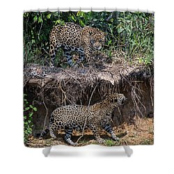 Two To Tango Shower Curtain by Wade Aiken