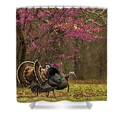 Two Tom Turkey And Redbud Tree Shower Curtain by Sheila Brown
