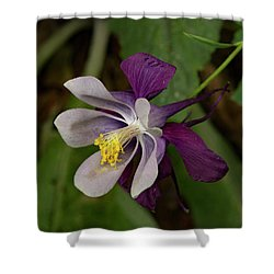 Shower Curtain featuring the photograph Two Toned Columbine by Jean Noren