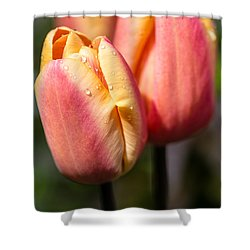 Two Toned Tulips  Shower Curtain by Martina Fagan