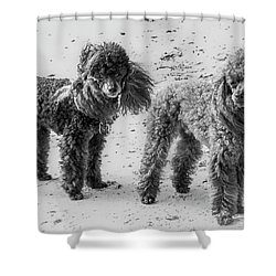 Two Toys B/w Shower Curtain