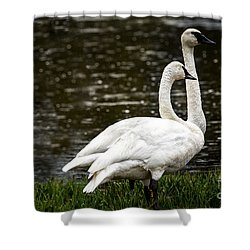 Shower Curtain featuring the photograph Two Trumpter Swans by Robert Bales