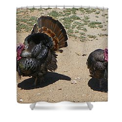 Shower Curtain featuring the photograph Two Turkeys by Joseph Frank Baraba