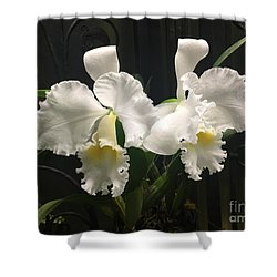 Two White Orchids Shower Curtain