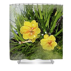 Two Yellow Beauties-2 Shower Curtain