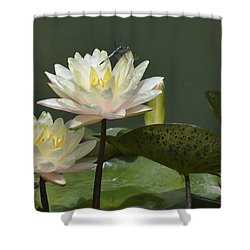 Two Yellow Water Lilies Shower Curtain by Linda Geiger