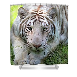 Shower Curtain featuring the photograph Tzatziki by Susan Rissi Tregoning