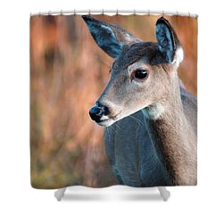 Tzavaot Shower Curtain by Bill Stephens