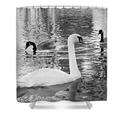 Ugly Duckling Shower Curtain