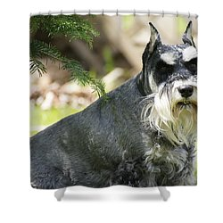 Unaware Shower Curtain by David and Lynn Keller