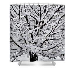 Unbelievable Tree Shower Curtain