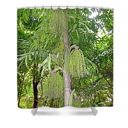 Shower Curtain featuring the photograph Under A Tropical Tree by Francesca Mackenney