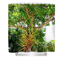 Shower Curtain featuring the photograph Under A Tropical Tree M by Francesca Mackenney