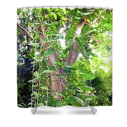 Shower Curtain featuring the photograph Under A Tropical Tree With Vines by Francesca Mackenney