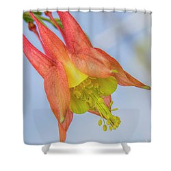 Under A Wild Columbine Shower Curtain by Barbara Bowen