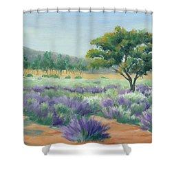Under Blue Skies In Lavender Fields Shower Curtain