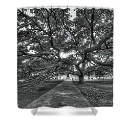 Under The Century Tree - Black And White Shower Curtain by David Morefield