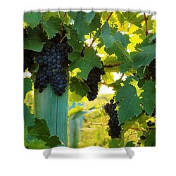 Shower Curtain featuring the photograph Under The Leaves by Lynn Hopwood