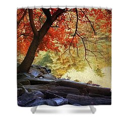 Under The Maple Shower Curtain by Jessica Jenney