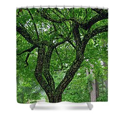 Shower Curtain featuring the photograph Under The Shade Tree by Tikvah's Hope