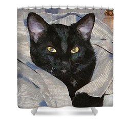 Undercover Kitten Shower Curtain