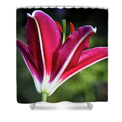 Underside Of Asiatic Tiger Lily 1653 H_2 Shower Curtain