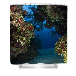 Underwater Crevice Through A Coral Shower Curtain by Todd Winner