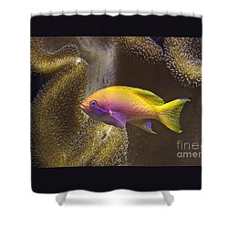 Shower Curtain featuring the photograph Underwater Dream by Xn Tyler
