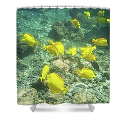 Underwater Yellow Tang Shower Curtain