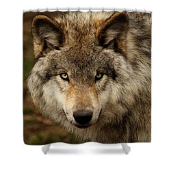Undivided Attention Shower Curtain