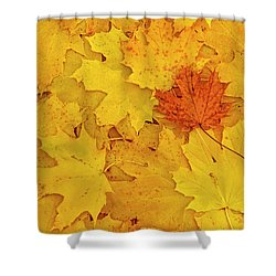 Shower Curtain featuring the photograph Understory by Tony Beck