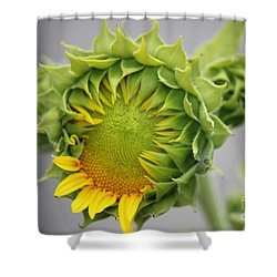 Unfolding Sunflower Shower Curtain