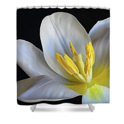 Unfolding Tulip. Shower Curtain by Terence Davis