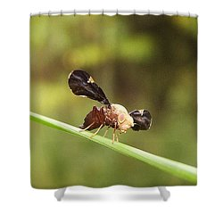 Unidenti Fly Shower Curtain by Joshua Bales