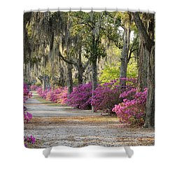 Unpaved Road With Azaleas And Oaks Shower Curtain
