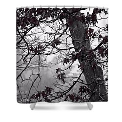 Until The Last Leaf Falls Shower Curtain