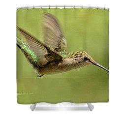Untitled Hum_bird_one Shower Curtain