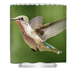 Untitled Hum_bird_two Shower Curtain
