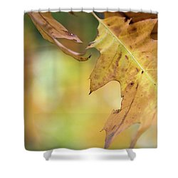 Up And Away -  Shower Curtain