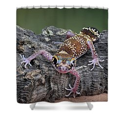Shower Curtain featuring the photograph Up And Over - Gecko by Nikolyn McDonald