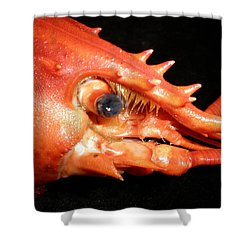 Shower Curtain featuring the photograph Up Close Lobster by Patricia Piffath