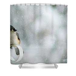 Up Front Shower Curtain by Barbara S Nickerson