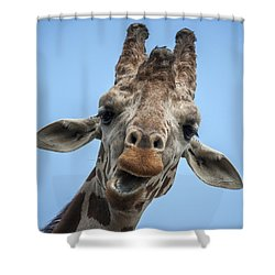 Up Here Shower Curtain